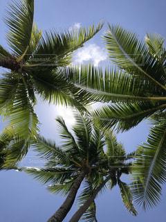 ヤシの木から太陽の写真・画像素材[1125683]