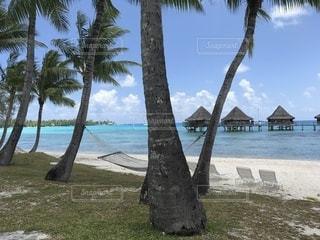 ビーチ、ヤシの木、水上コテージの写真・画像素材[1125696]