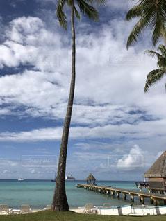 ヤシの木とビーチの写真・画像素材[1125698]