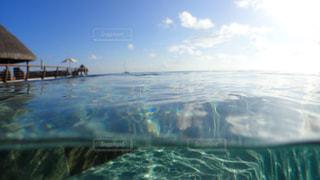 水面下を泳ぐの写真・画像素材[1125711]