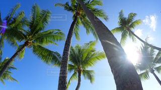 ヤシの木とビーチの写真・画像素材[1125718]