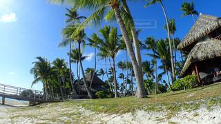 ヤシの木とビーチの写真・画像素材[1125721]