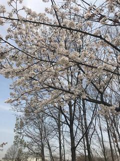 フォレスト内のツリーの写真・画像素材[1123994]