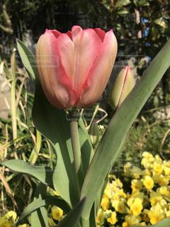 近くの花のアップの写真・画像素材[1127887]