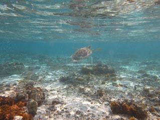 水の体の横に立っている人の写真・画像素材[1124128]