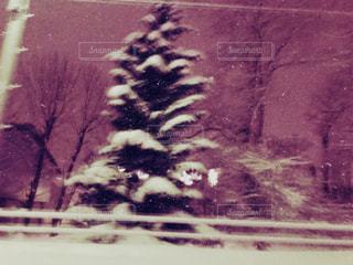 雪の中に立っている木の写真・画像素材[1124575]