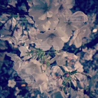 近くの花のアップの写真・画像素材[1885339]