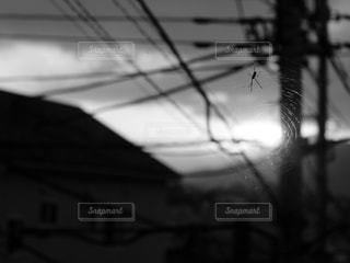 クモの巣の写真・画像素材[1126797]