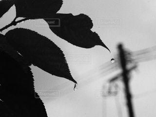 雨粒が落ちるの写真・画像素材[1126833]
