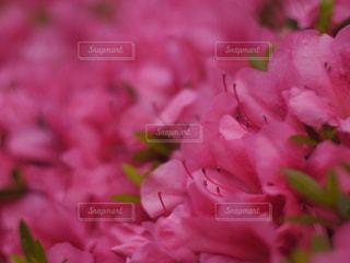 近くの花のアップの写真・画像素材[1130990]