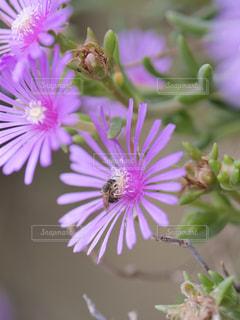 顔を埋めるミツバチの写真・画像素材[1213374]