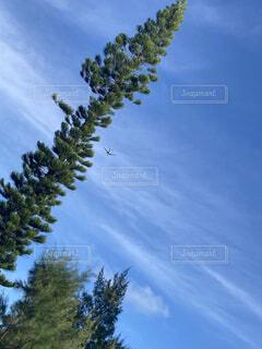 青空と木と飛行機の写真・画像素材[4743795]