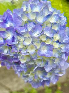 近くに紫の花のアップの写真・画像素材[1199391]