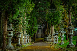 神社へ続く道の写真・画像素材[1875760]