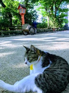 猫の写真・画像素材[469720]