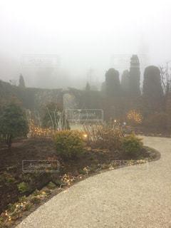 霧の中の庭園の写真・画像素材[1125595]