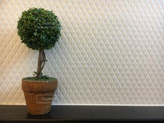 緑の葉がたくさんトッピング テーブル - No.1125849