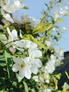 近くの花のアップの写真・画像素材[1126107]