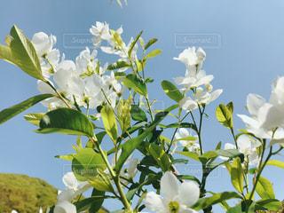 植物の花の花瓶の写真・画像素材[1126112]