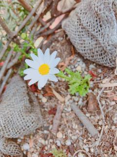 近くの花のアップの写真・画像素材[1127398]