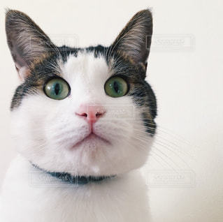 猫の顔アップの写真・画像素材[1133128]