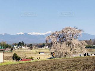 しだれ桜のある風景の写真・画像素材[1127123]