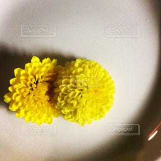 花の写真・画像素材[1237553]
