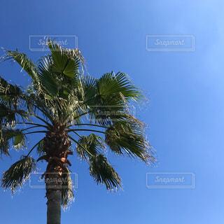 空と木の写真・画像素材[1237556]