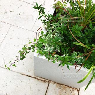 植物の写真・画像素材[1237557]