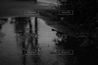 近くに池のアップの写真・画像素材[1127686]