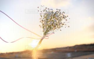 花束の写真・画像素材[1127701]