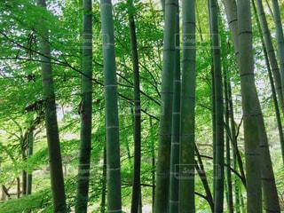 竹の中の世界の写真・画像素材[1143471]