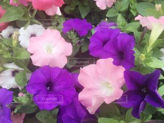 六本木で咲いていた花の写真・画像素材[1146379]