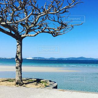 沖縄 海中道路の写真・画像素材[1137566]