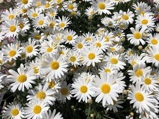 黄色の花で一杯の花瓶の写真・画像素材[1130437]