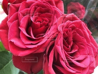 花のように赤いバラ - No.1130692