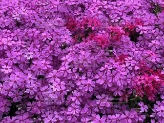 近くに紫の花のアップ - No.1130723