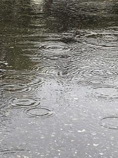 水たまりの波紋の写真・画像素材[1134537]