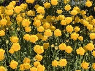 近くに黄色い花のアップの写真・画像素材[1138051]