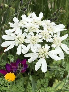 近くの花のアップの写真・画像素材[1144566]