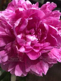 近くの花のアップ - No.1144670