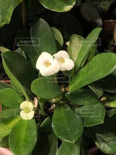 近くの花のアップ - No.1144672