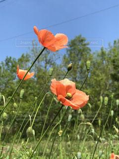 花のように凧の飛行人 - No.1147295