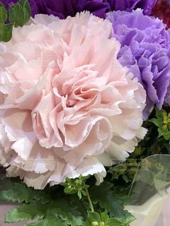 近くの花のアップの写真・画像素材[1175280]