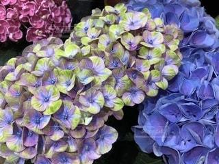 近くに紫の花のアップ - No.1175283