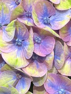 紫の花のグループ - No.1181008