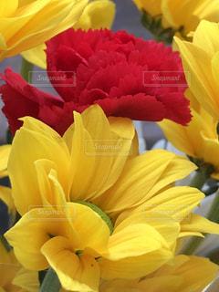 近くに黄色い花のアップ - No.1181018