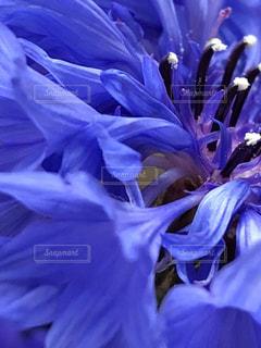 近くの花のアップ - No.1181035