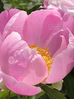 近くの花のアップの写真・画像素材[1182116]