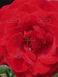 近くの花のアップの写真・画像素材[1201985]